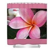 Pink Plumeria Shower Curtain