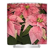 Pink Poinsettias Close-up Shower Curtain