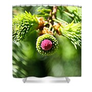 Pink Point Shower Curtain