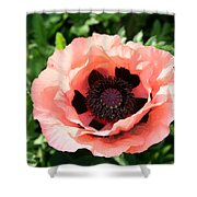 Pink Poppy Bloom Shower Curtain