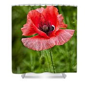 Pink Poppy Flower Among The Green Background Shower Curtain