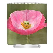Pink Poppy Flower Shower Curtain