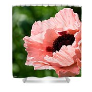 Pink Poppy Today Shower Curtain