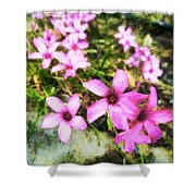 Pink Propellers  Shower Curtain