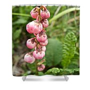 Pink Pyrola On Alpine Tundra Trail By Eielsen Visitor's Center In Denali Np-ak Shower Curtain