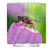 Pink Reflection On Flies Body. Shower Curtain