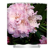 Pink Rhodies Shower Curtain