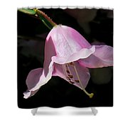 Pink Rhododendron Blossom Shower Curtain
