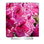 Rhododendron Called Azalea Bright Pink Flowers  Shower Curtain