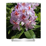 Pink Rhododendron In Sunshine Shower Curtain
