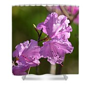 Pink Rhododendrons Shower Curtain