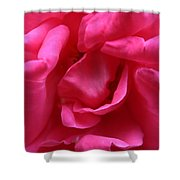 Pink Rose 01 Shower Curtain