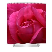 Pink Rose 02 Shower Curtain