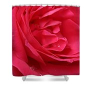 Pink Rose 03 Shower Curtain
