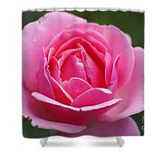 Pink Rose 08 Shower Curtain