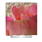 Pink Rose 3 Shower Curtain