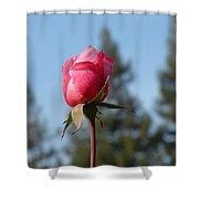 Pink Rose And Trees Shower Curtain