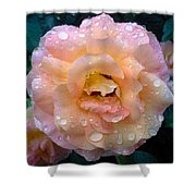 Pink Rose Bathed In Rain Shower Curtain