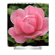 Pink Rose Bloom Shower Curtain