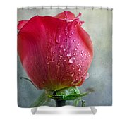 Pink Rose Bud With Drops Shower Curtain
