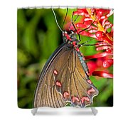 Pink Rose Butterfly Shower Curtain