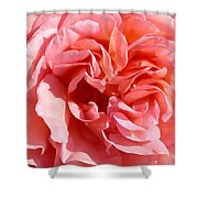 Pink Rose Closeup Shower Curtain