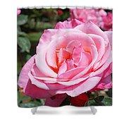 Pink Rose Flower Floral Art Prints Roses Shower Curtain
