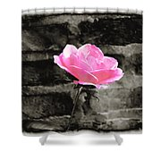 Pink Rose In Black And White Shower Curtain
