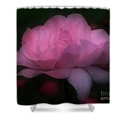 Pink Rose In Bloom Shower Curtain