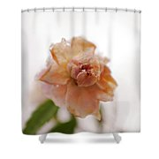 Pink Rose In Snow Shower Curtain