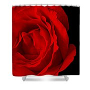Pink Rose Isolated On Black Shower Curtain