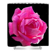 Pink Rose On Black Shower Curtain
