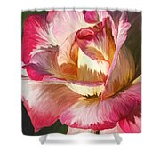 Pink Rose Painted  Shower Curtain