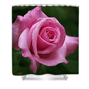 Pink Rose Perfection Shower Curtain by Rona Black