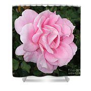 Pink Rose Square Shower Curtain
