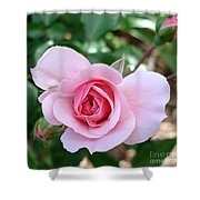 Pink Rose - Square Print Shower Curtain