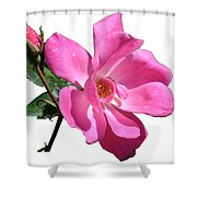 Pink Rose With Bud Shower Curtain