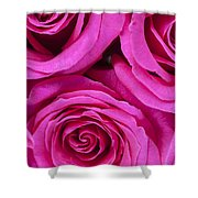 Pink Roses 2 Shower Curtain