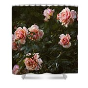 Flowers - Pink Roses Shower Curtain