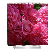 Pink Roses In Sunlight Shower Curtain