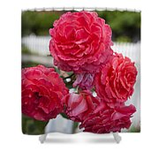 Pink Roses White Picket Fence Shower Curtain