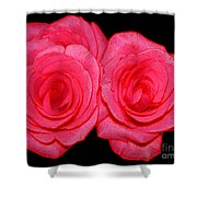 Pink Roses With Colored Edges Effects Shower Curtain