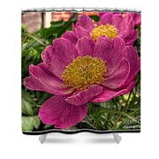 Pink Row Shower Curtain