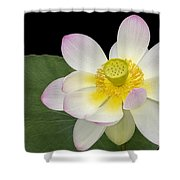 Pink Sacred Lotus Flower Shower Curtain