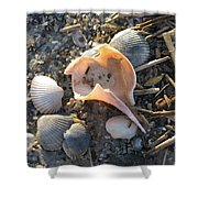Pink Shell Bowl Shower Curtain