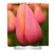 Pink Silk Shower Curtain