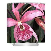 Pink Spotted Cattleya Orchids Shower Curtain