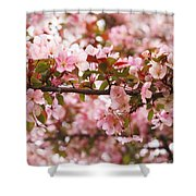 Pink Spring Apple Blossoms Shower Curtain
