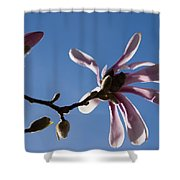 Pink Spring - Blue Sky And Magnolia Blossoms Shower Curtain