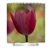 Pink Spring Shower Curtain